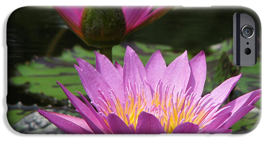 Lillypad IPhone 6 Case featuring the photograph Peaceful by Amanda Barcon