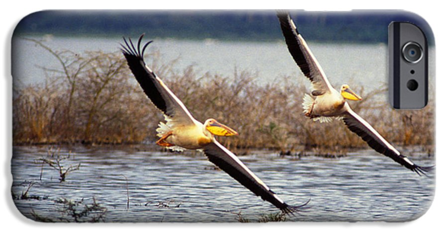 Birds IPhone 6 Case featuring the photograph Pelicans In Flight by Carl Purcell