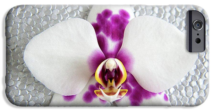 Nature IPhone 6 Case featuring the photograph Phalaenopsis Yu Pin Panda by Julia Hiebaum