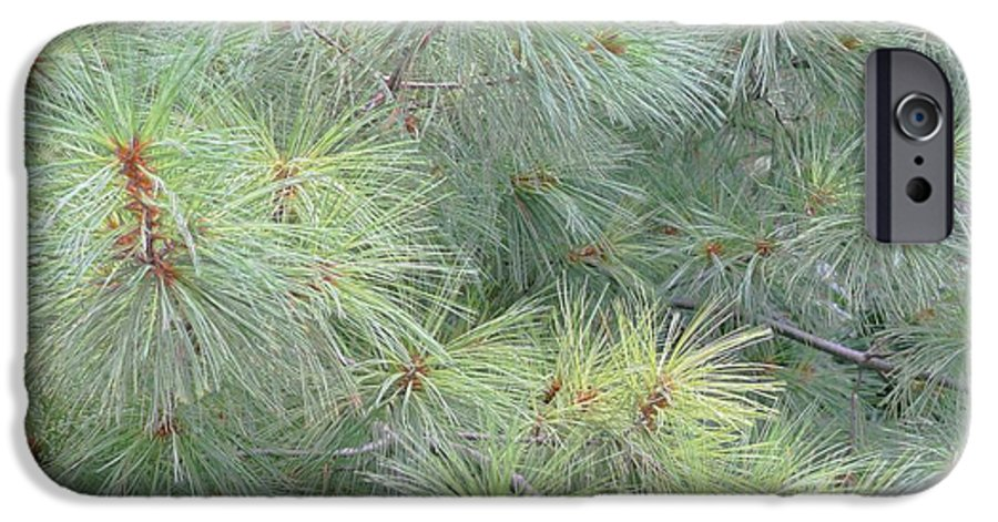 Pines IPhone 6 Case featuring the photograph Pines by Rhonda Barrett