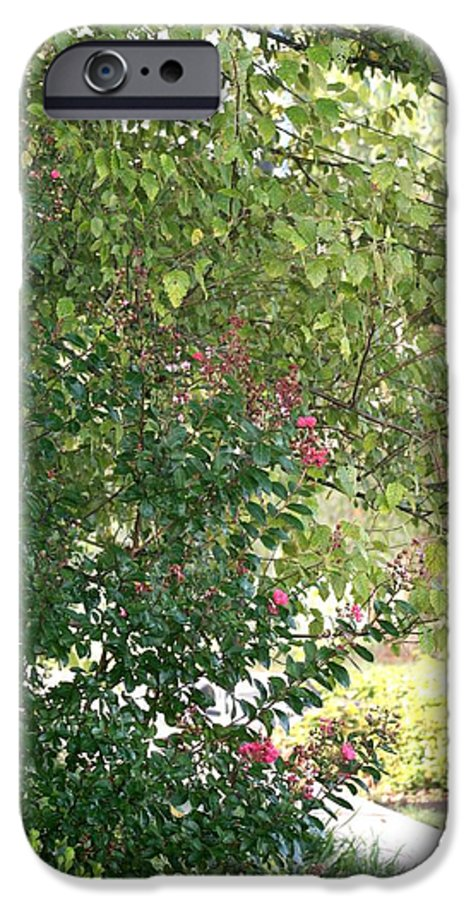 Path IPhone 6 Case featuring the photograph Pink And Green Path by Nadine Rippelmeyer