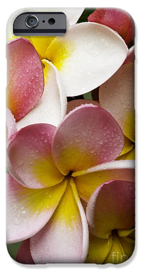 Pink Frangipani IPhone 6 Case featuring the photograph Pink Frangipani by Sheila Smart Fine Art Photography