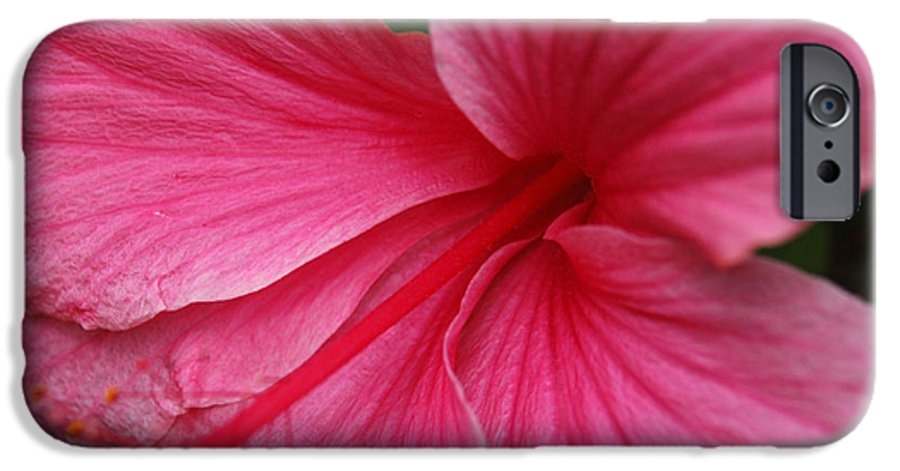 Pink IPhone 6 Case featuring the photograph Pink Hibiscus by Kathy Schumann