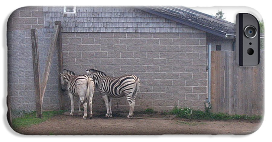 Zebra IPhone 6 Case featuring the photograph Plains Zebras In The Corner by Melissa Parks