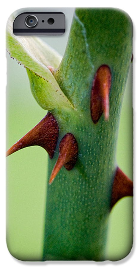 Thorns IPhone 6 Case featuring the photograph Pointed Personality by Christopher Holmes