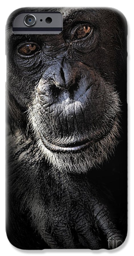 Chimp IPhone 6 Case featuring the photograph Portrait Of A Chimpanzee by Avalon Fine Art Photography