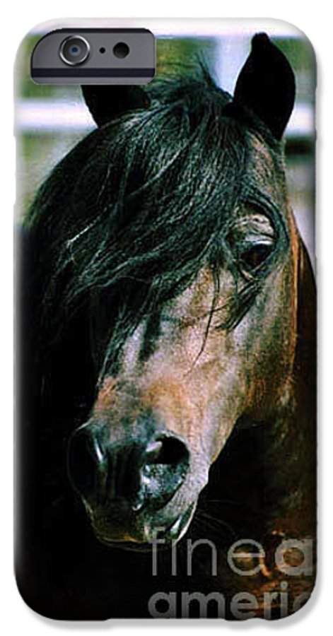 Horse IPhone 6 Case featuring the photograph Portrait Of His Majesty - The King by Kathy McClure