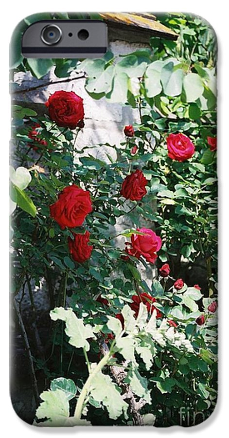 Floral IPhone 6 Case featuring the photograph Provence Red Roses by Nadine Rippelmeyer