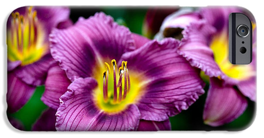 Flower IPhone 6 Case featuring the photograph Purple Day Lillies by Marilyn Hunt