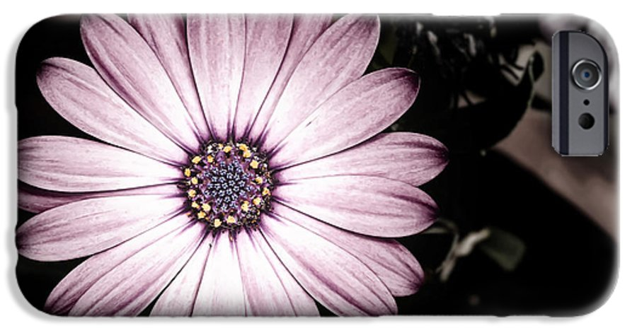 Flower IPhone 6 Case featuring the photograph Purple Flower by Al Mueller