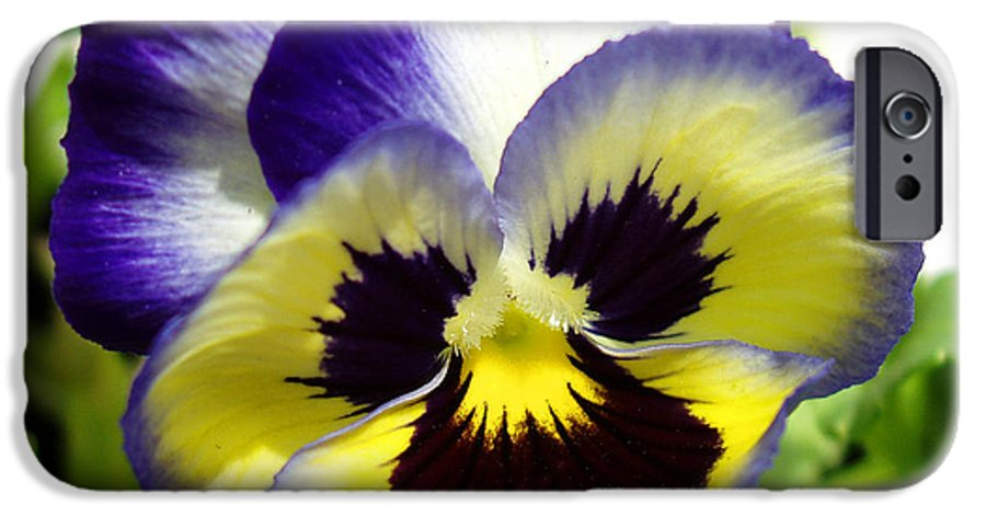 Pansy IPhone 6 Case featuring the photograph Purple White And Yellow Pansy by Nancy Mueller