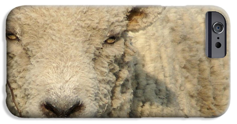 Farm Animal IPhone 6 Case featuring the photograph Ramsy - Debbie-may by Debbie May