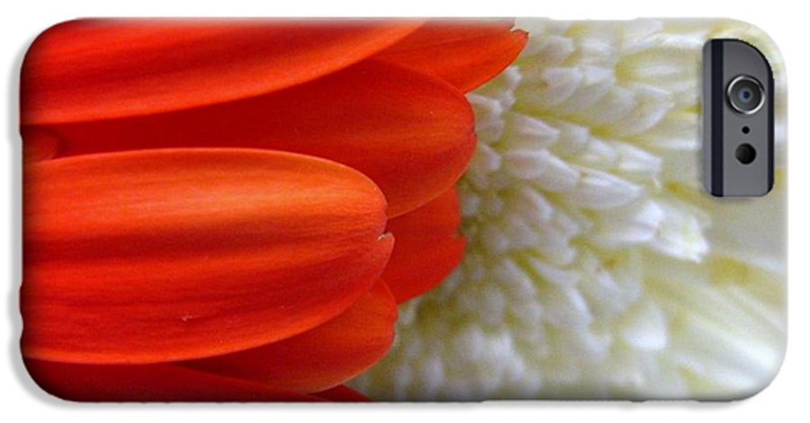 Flowers IPhone 6 Case featuring the photograph Red And White by Rhonda Barrett