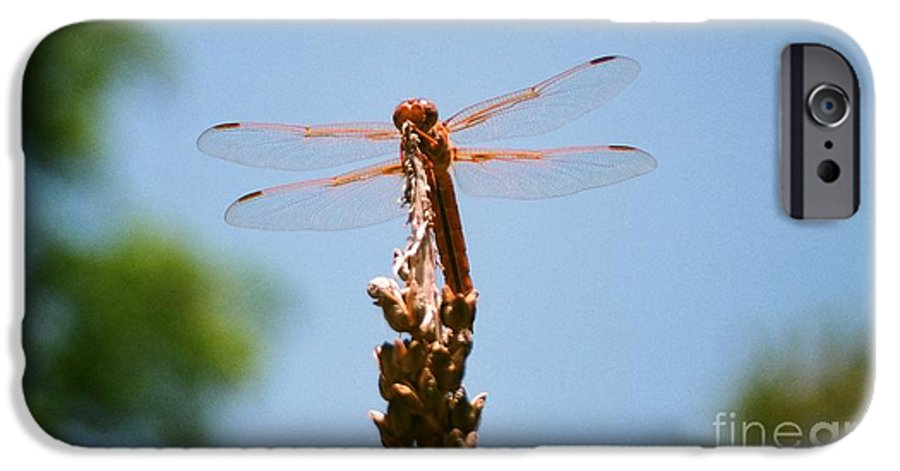 Dragonfly IPhone 6 Case featuring the photograph Red Dragonfly by Dean Triolo