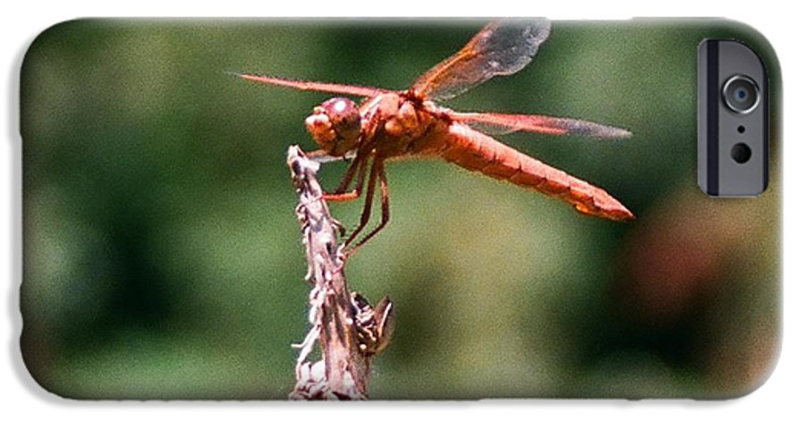 Dragonfly IPhone 6 Case featuring the photograph Red Dragonfly II by Dean Triolo