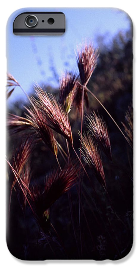 Nature IPhone 6 Case featuring the photograph Red Feathers by Randy Oberg