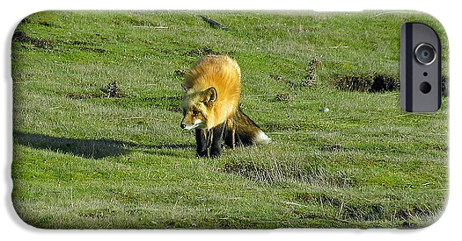 Fox IPhone 6 Case featuring the photograph Red Fox by Louise Magno