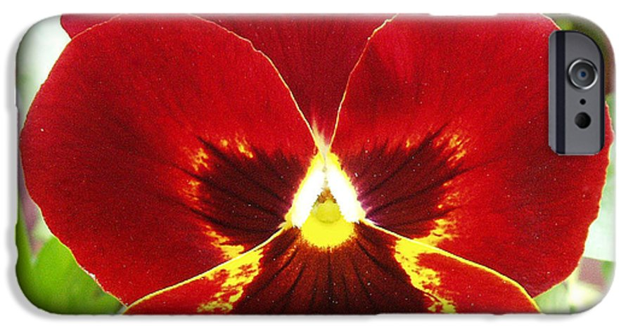 Red IPhone 6 Case featuring the photograph Red Pansy by Nancy Mueller