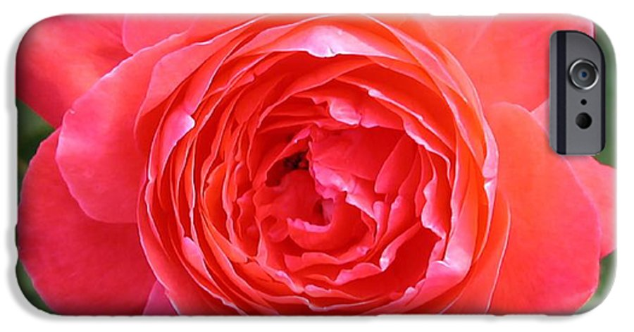 Photograph IPhone 6 Case featuring the photograph Red Rose by Dave Martsolf