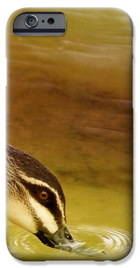 Animals IPhone 6 Case featuring the photograph Ripples by Holly Kempe
