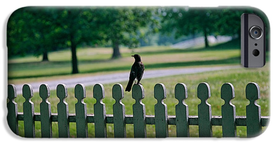 Bird IPhone 6 Case featuring the photograph Robin On A Fence by Lone Dakota Photography