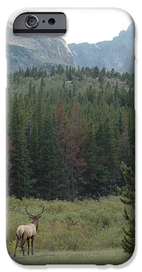Elk IPhone 6 Case featuring the photograph Rocky Mountain Elk by Kathy Schumann