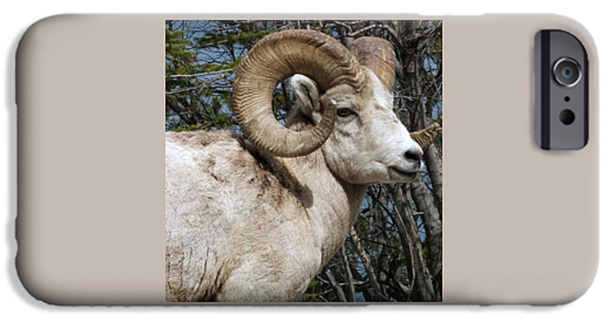 Wildlife IPhone 6 Case featuring the photograph Rocky Mountain Ram by Tiffany Vest