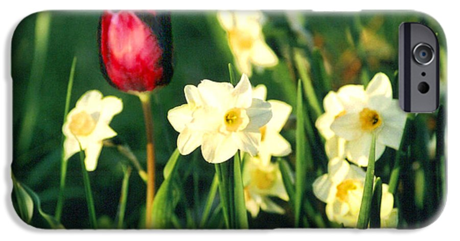 Tulips IPhone 6 Case featuring the photograph Royal Spring by Steve Karol