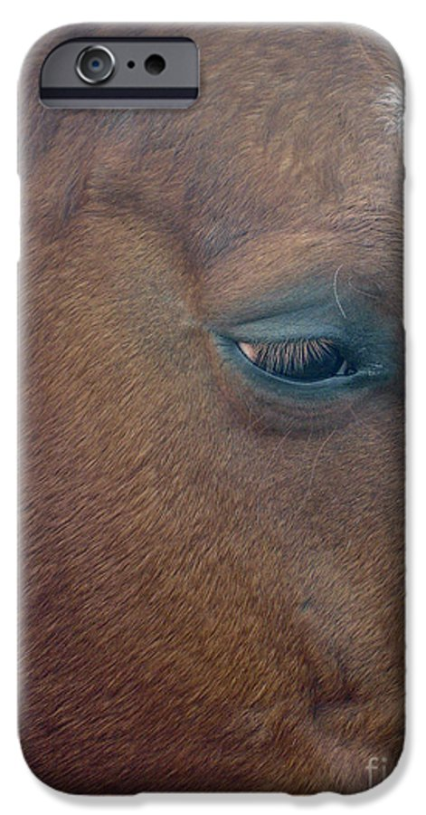 Horse IPhone 6 Case featuring the photograph Sad Eyed by Shelley Jones