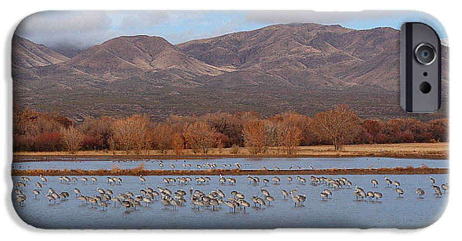 Sandhill Crane IPhone 6 Case featuring the photograph Sandhill Cranes Beneath The Mountains Of New Mexico by Max Allen