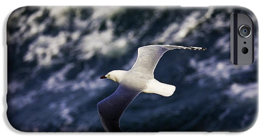 Seagull IPhone 6 Case featuring the photograph Seagull In Wake by Sheila Smart Fine Art Photography