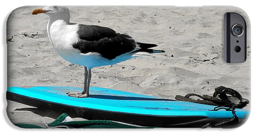 Bird IPhone 6 Case featuring the photograph Seagull On A Surfboard by Christine Till