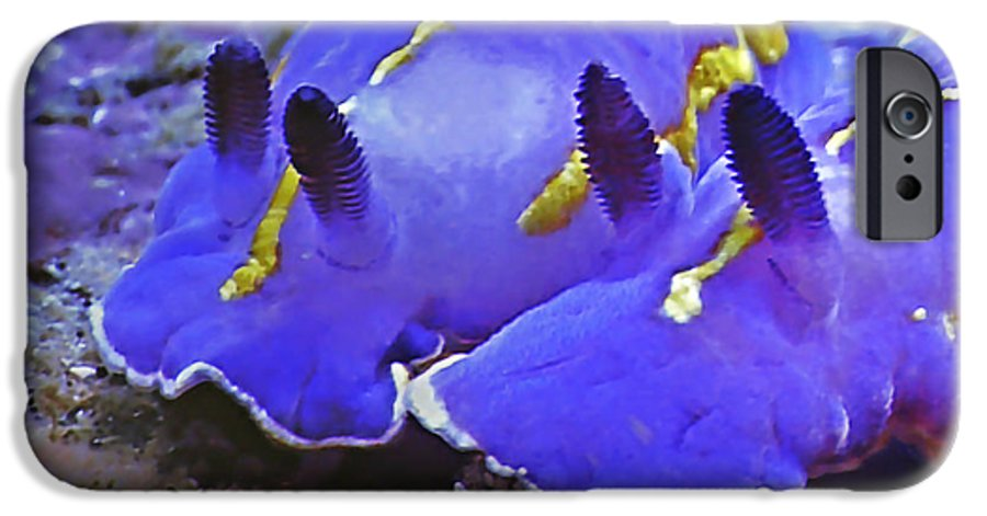 Ocean IPhone 6 Case featuring the photograph Sealife Underwater Snails by Christine Till