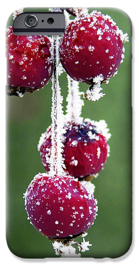 Berries IPhone 6 Case featuring the photograph Seasonal Colors by Marilyn Hunt