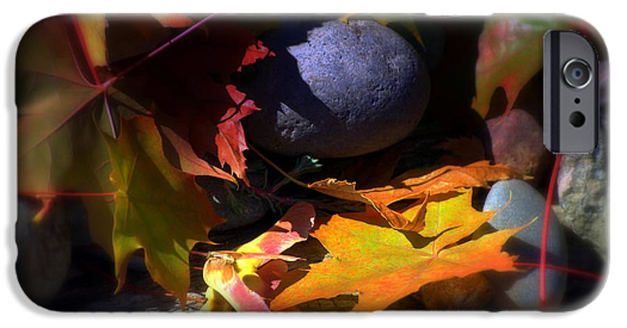 Leaves IPhone 6 Case featuring the photograph Seed by Larry Keahey