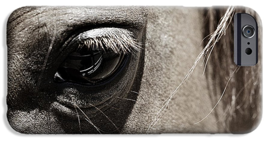 Americana IPhone 6 Case featuring the photograph Stillness In The Eye Of A Horse by Marilyn Hunt