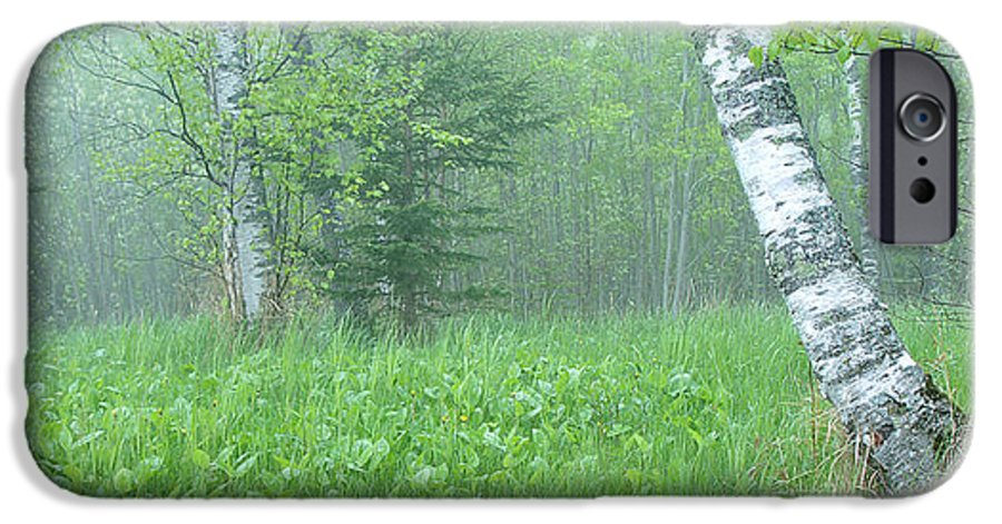 Landscape IPhone 6 Case featuring the photograph Silent Birch by Bill Morgenstern
