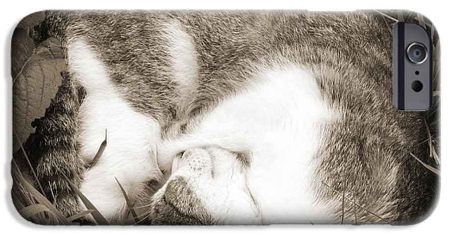 Pets IPhone 6 Case featuring the photograph Sleeping by Daniel Csoka