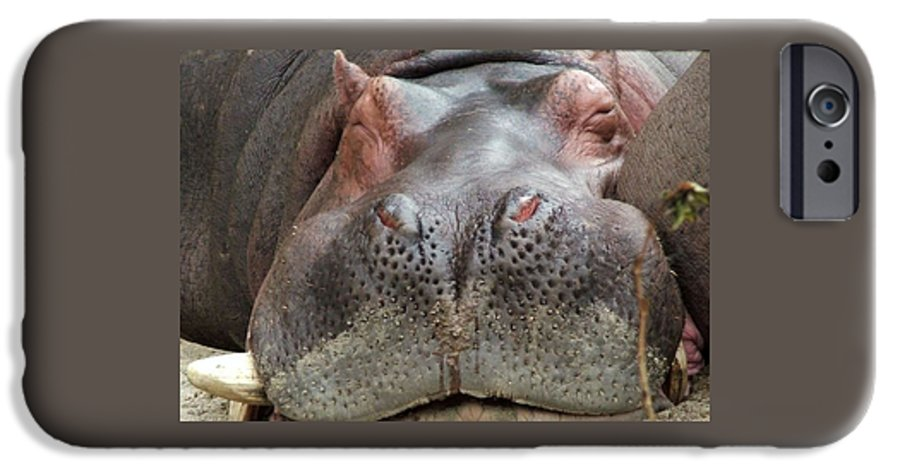 Hippopotamus IPhone 6 Case featuring the photograph Sleeping Hippo by Tiffany Vest