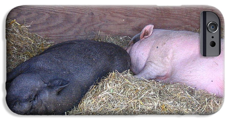 Pig IPhone 6 Case featuring the photograph Sleeping Pigs In The Hay by Melissa Parks