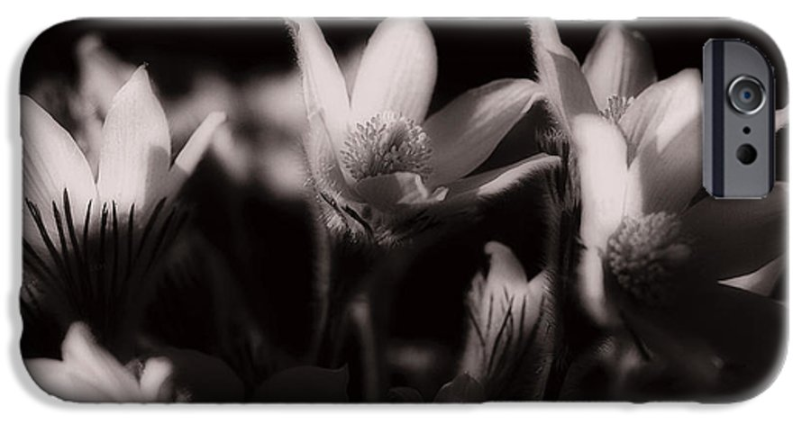 Flowers IPhone 6 Case featuring the photograph Sleepy Flowers by Marilyn Hunt