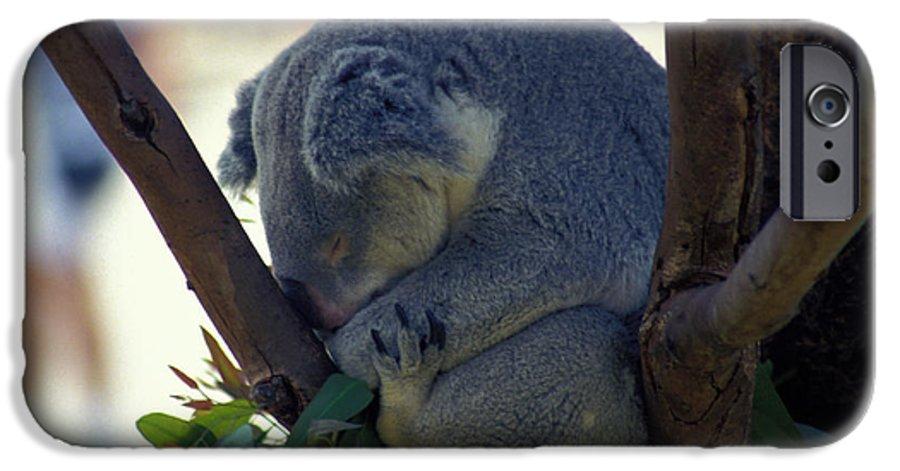 Sleep IPhone 6 Case featuring the photograph Sleepy Koala Bear by Carl Purcell