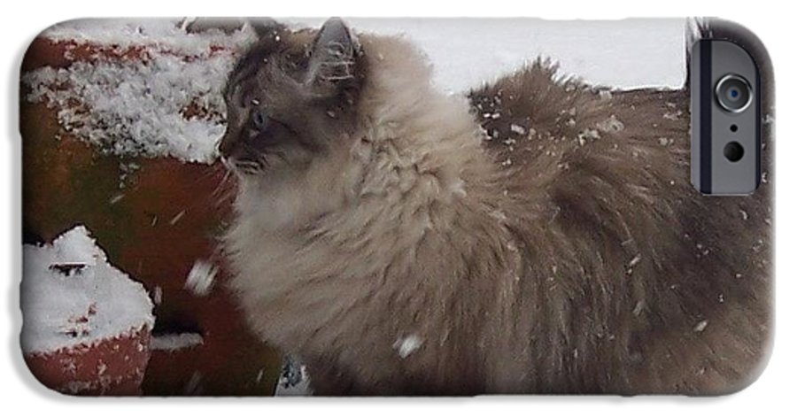 Cats IPhone 6 Case featuring the photograph Snow Kitty by Debbi Granruth