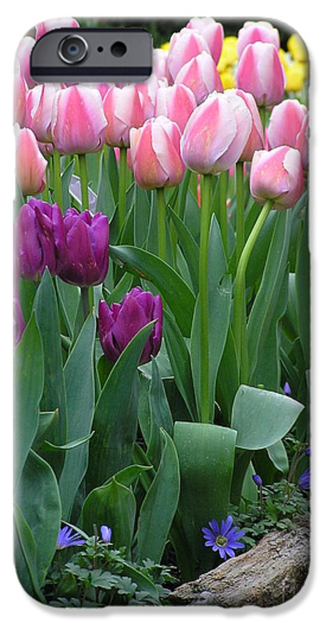 Tulips IPhone 6 Case featuring the photograph Spring Colors by Louise Magno