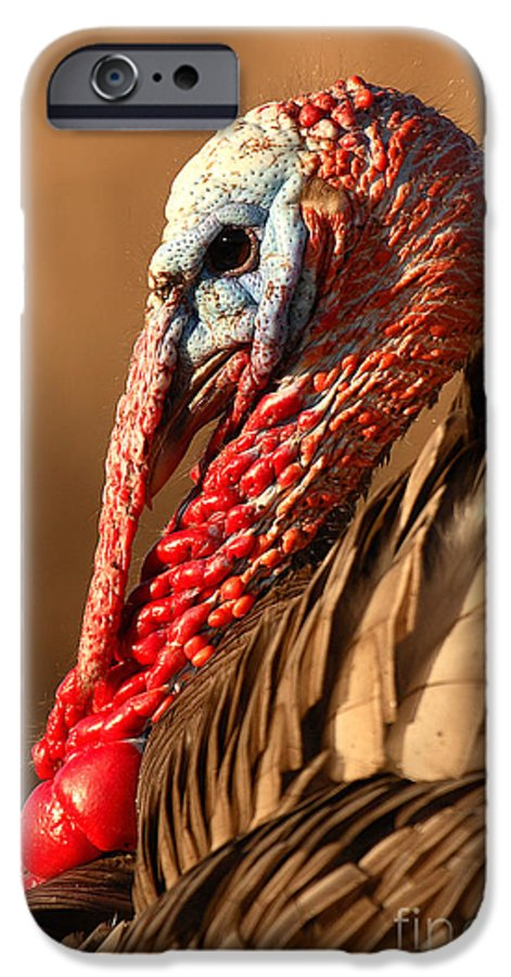 Turkey IPhone 6 Case featuring the photograph Spring Portrait Of Wild Turkey Tom by Max Allen