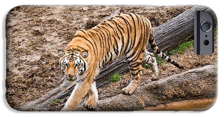 Tiger IPhone 6 Case featuring the photograph Stalking Tiger - Bengal by Douglas Barnett