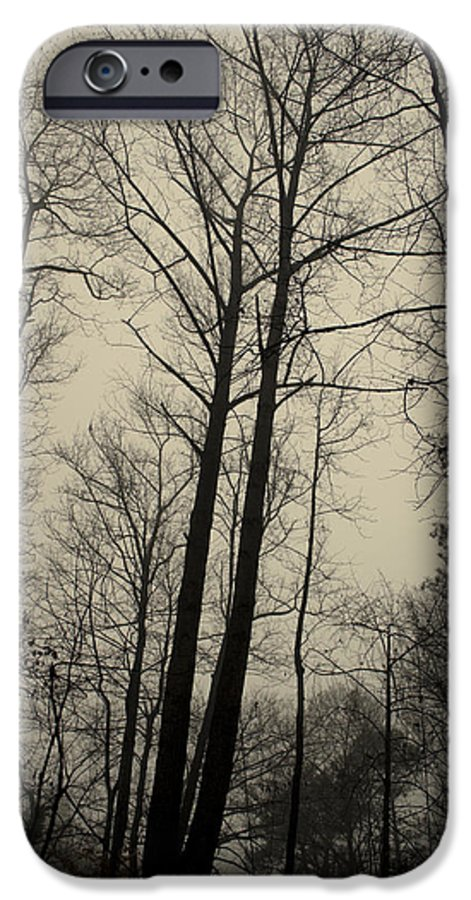 Trees IPhone 6 Case featuring the photograph Standing Tall by Ayesha Lakes