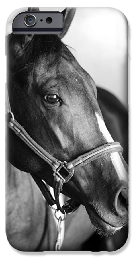 Horse IPhone 6 Case featuring the photograph Horse And Stillness by Marilyn Hunt