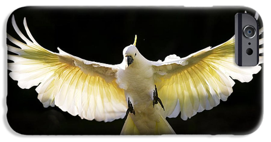 Sulphur Crested Cockatoo Australian Wildlife IPhone 6 Case featuring the photograph Sulphur Crested Cockatoo In Flight by Sheila Smart Fine Art Photography