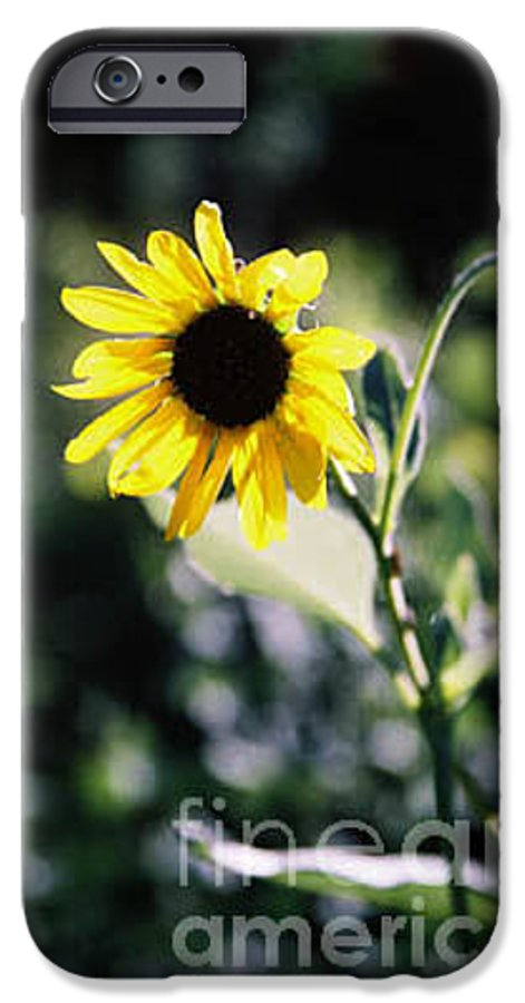 Sunflower IPhone 6 Case featuring the photograph Summer Sunshine by Kathy McClure